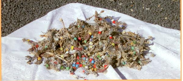 foto nido de halcon
